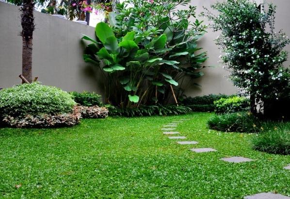 Rumput Untuk Taman Rumah