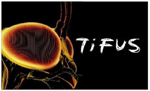 Penyebab, Gejala Dan Cara Mencegah Penyakit Tifus