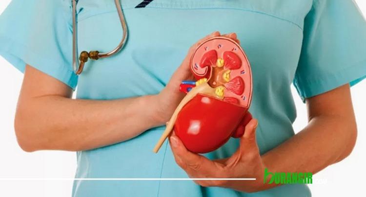Menjaga Kesehatan Ginjal Dengan Pola Makan Sehat