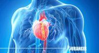 4 Hal Yang Harus Kamu Lakukan Agar Kesehatan Jantungmu Terjaga